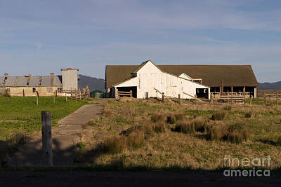Historic D Ranch In Point Reyes California Dsc2399 Poster by Wingsdomain Art and Photography