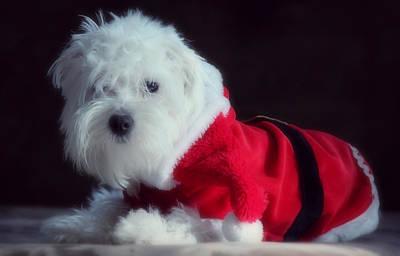 Ho Ho Ho Merry Christmas Poster by Melanie Lankford Photography