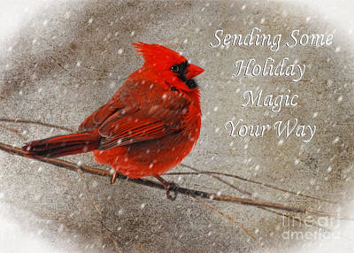 Holiday Magic Cardinal Card Poster by Lois Bryan