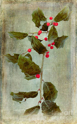 Holly Branch With Red Berries Poster by Dan Carmichael