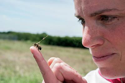 Honeybee Radar Tagging Poster by Louise Murray