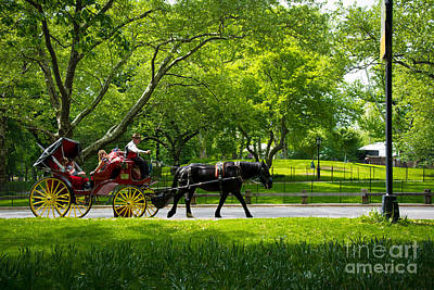 Horse And Carriage Central Park Poster by Amy Cicconi