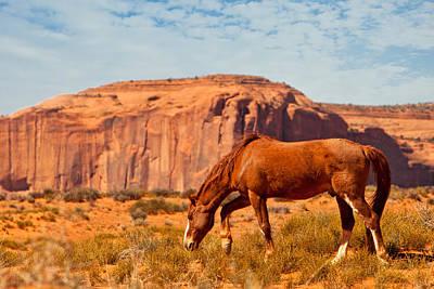 Horse In The Desert Poster by Susan Schmitz