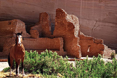 Horse Ruins In Canyon De Chelly Poster by Julie Magers Soulen