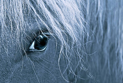 Horse's Eye Blue Poster by Jennie Marie Schell