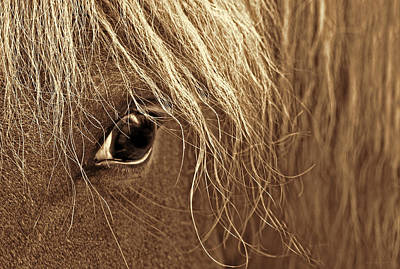 Horse's Eye Sepia Poster by Jennie Marie Schell