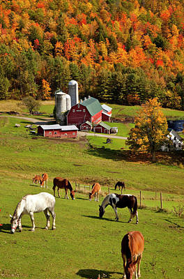 Horses Grazing Above A Farm In Autumn Poster by Brian Jannsen
