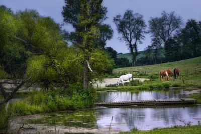 Horses Grazing At Water's Edge Poster by Tom Mc Nemar