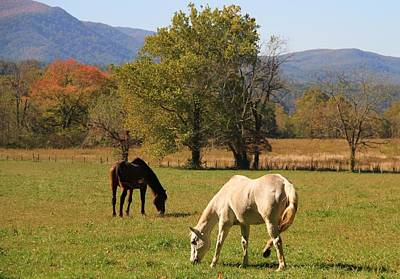 Horses In Cades Cove Poster by Dan Sproul
