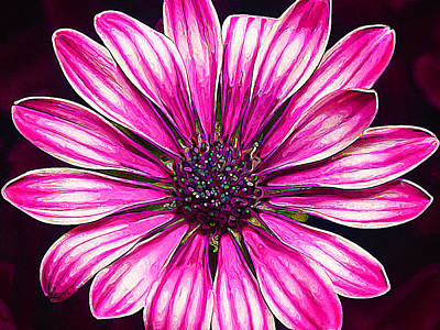 Hot Pink Daisy Poster by Bill Caldwell -        ABeautifulSky Photography