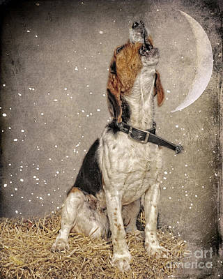 Howl At The Moon Poster by Jak of Arts Photography