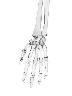 Human Hand Bones Poster by Sciepro