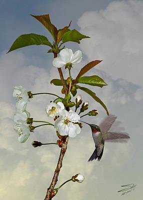 Hummingbird And Apple Blossom Poster by Matthew Schwartz