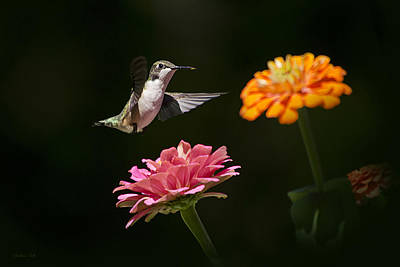 Hummingbird And Summer Blooms Poster by Christina Rollo