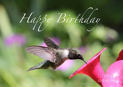 Hummingbird At Feeder Birthday Card Poster by Carol Groenen