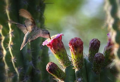 Hummingbird Breakfast Southwest Style  Poster by Saija  Lehtonen