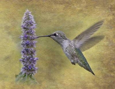 Hummingbird In The Mint Poster by Angie Vogel