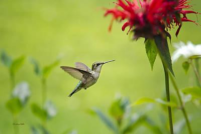 Hummingbird Paradise Poster by Christina Rollo