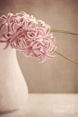 Hyazinth In A Vase Poster by Priska Wettstein
