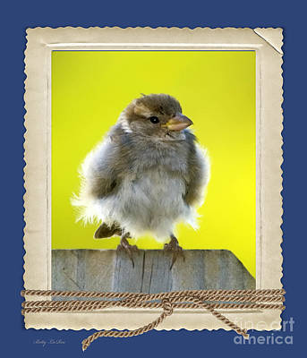 I Miss My Nest Poster by Betty LaRue