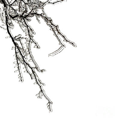 Ice On Branches Poster by Blink Images