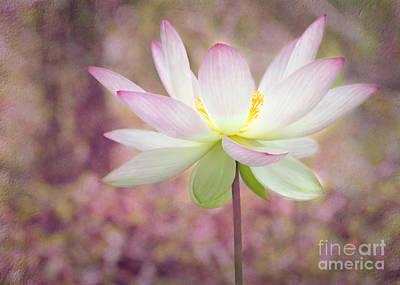 Illuminated Lotus Poster by Sabrina L Ryan