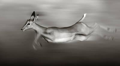 Impala Running  Poster by Johan Swanepoel
