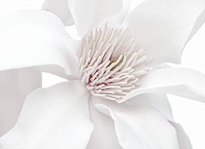 Innocence White Magnolia Flower Poster by Jennie Marie Schell