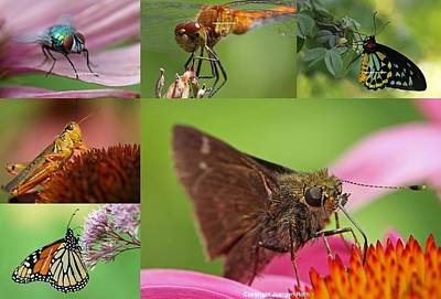 Insect Macro Photography Art Poster by Juergen Roth