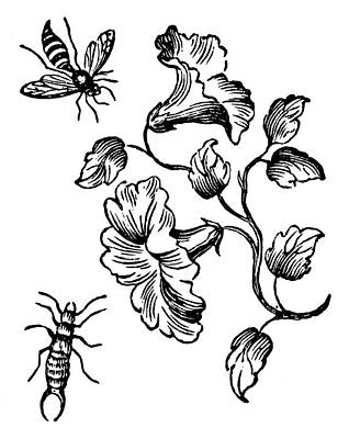 Insects Bee & Earwig Poster by Granger