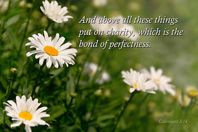 Inspirational - Daisy - Colossians 3-14 Poster by Mike Savad