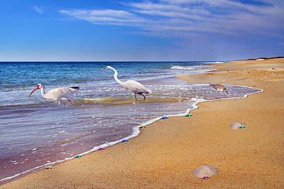 Inspiring Ibis Egret Sandpiper Starfish Sand Dollars  Poster by Betsy C Knapp