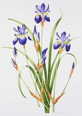 Iris Sibirica Poster by Sally Crosthwaite