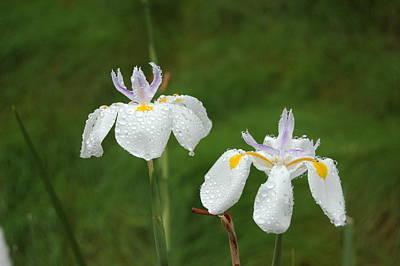 Irises In The Rain Poster by Linda Brody