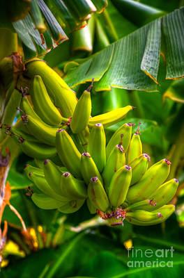 Island Bananas Poster by Kelly Wade