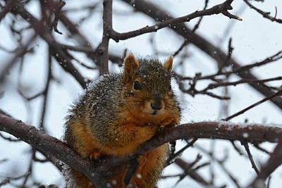 Its Cold Said The Squirrel Poster by Rae Ann  M Garrett