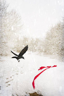 Jackdaw In Snow Poster by Amanda Elwell