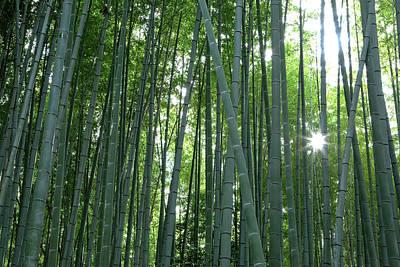 Japan, Kyoto Sunburst Poster by Jaynes Gallery