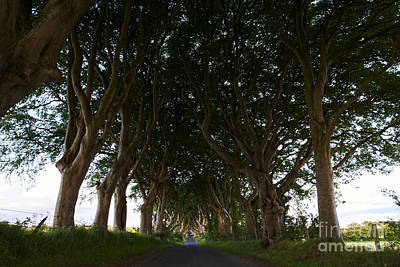 Joe Fox Fine Art - The Dark Hedges Balllymoney Ireland Site Of The Kings Road In Game Of Thrones Poster by Joe Fox
