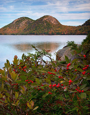 Jordan Pond With Berries Poster by Darylann Leonard Photography