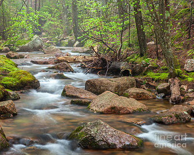Jordan Stream Springtime In Acadia Poster by Susan Cole Kelly