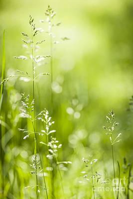 June Green Grass  Poster by Elena Elisseeva