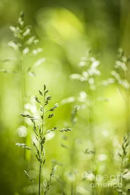 June Green Grass Flowering Poster by Elena Elisseeva