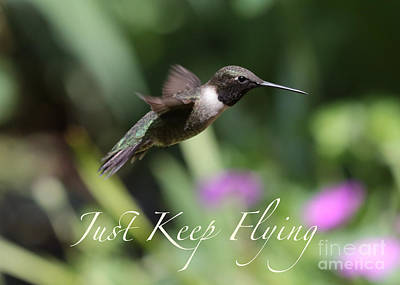 Just Keep Flying Poster by Carol Groenen