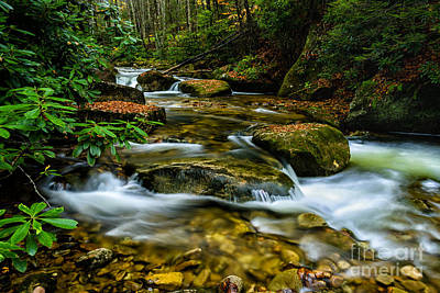 Kens Creek Cranberry Wilderness Poster by Thomas R Fletcher