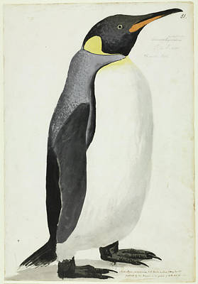 King Penguin Poster by Natural History Museum, London