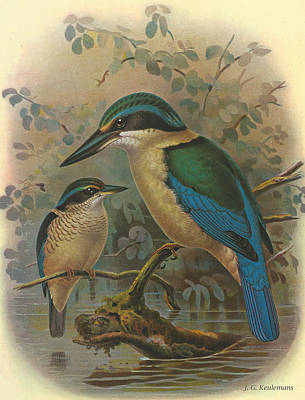 Kingfisher Poster by J G Keulemans