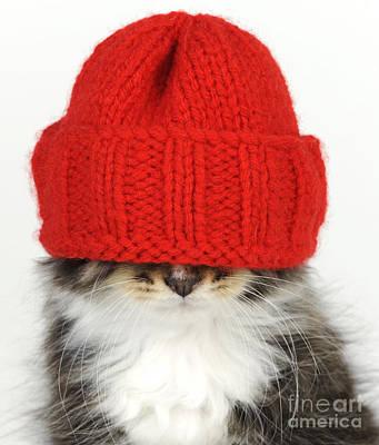 Kitten In A Hat Poster by John Daniels