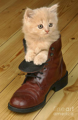 Kitten In Shoe Ck181 Poster by Greg Cuddiford