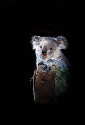Koala Bear Poster by Robert Bales